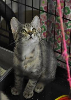 Felines Hoping for Adoption
