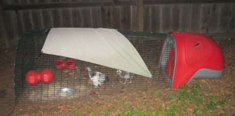 Post image for Chickens come home to roost in Menlo