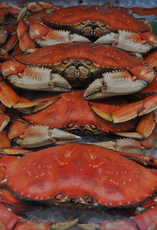 Crab from Cook's: a seasonal treat