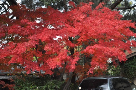 Fall Color Peaks – and a Rainfall Report