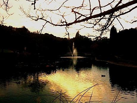 Sharon Park - Menlo Park