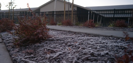 Frosty Morning in Menlo Park