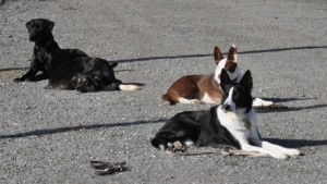 rescuedogs_down