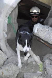 rescuedogs_sweep_emerges