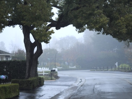 Menlo Park - Rainy Weather