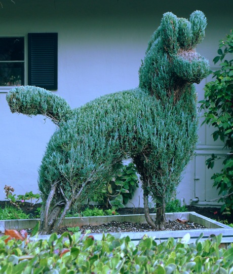 Post image for Vote is in – best front yard topiary!