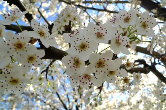 Spring in Menlo Park - InMenlo.com
