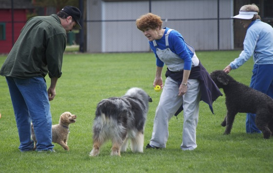 Off leash dog park at Nealon Park