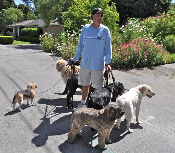 Menlo Park dog walker Phillip Stiles