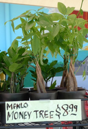 Post image for Spotted: Menlo money tree