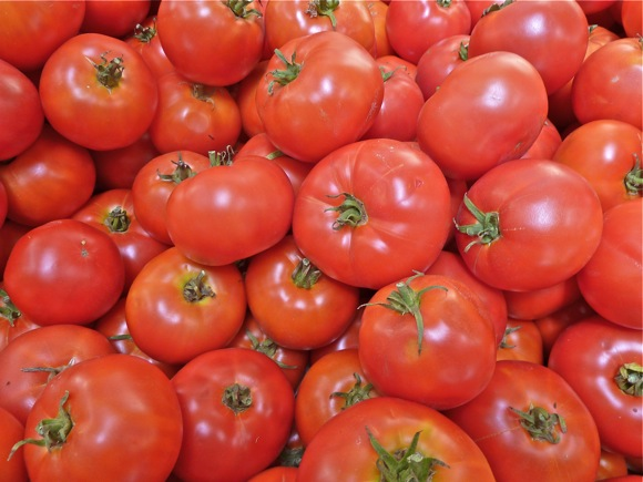 "It's Ace tomato time at Webb Ranch – they're great for making ""Mary's Famous Rustic Tomato Sauce"""
