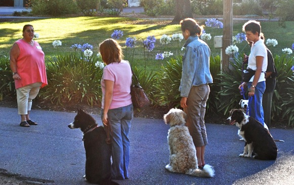 Dog Days class at Holbrook Palmer Park, Atherton