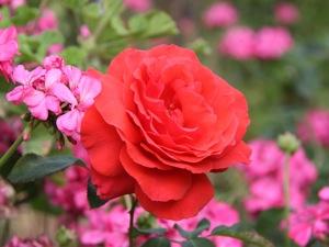 St. Raymond Church Rose Garden