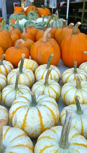 Pumpkins and gourds at Menlo Park Farmers Market