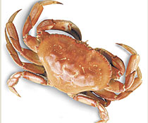 Dungenss crab