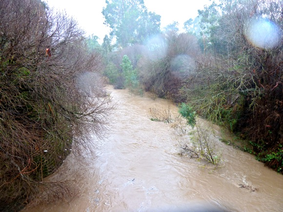 San Francisquito Creek on Dec. 19, 2010