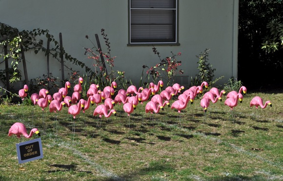 Spotted: No order to these flamingos