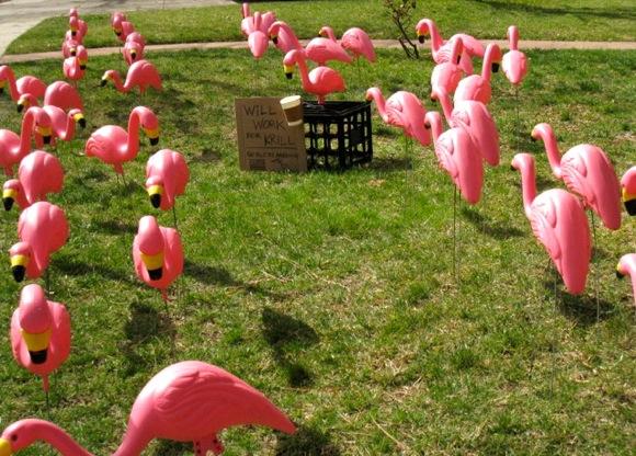 Flamingos raising money for Peninsula School
