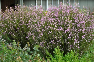 Three free water-efficient landscaping classes this Fall in Menlo Park