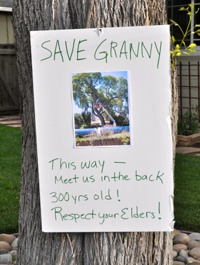"""Save Granny!"" is rallying cry of neighbors who gather to protest removal of Valley Oak"