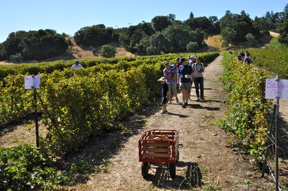 Berry picking at Webb Ranch in Menlo Park