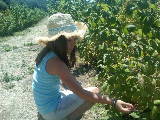 Spotted: Last of season's berries at Webb Ranch