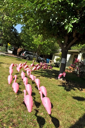 Willows Flamingo marching on 4th of July