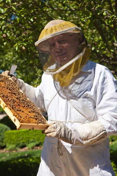 Beekeeper Dirk Kiehne