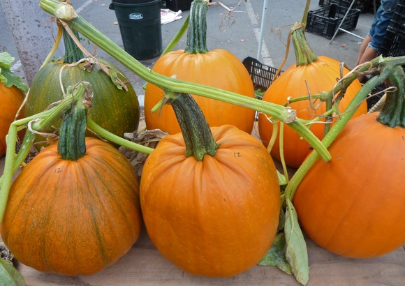 Spotted: Cozzolino pumpkins, Lucero tomatoes at Menlo Park Farmers Market