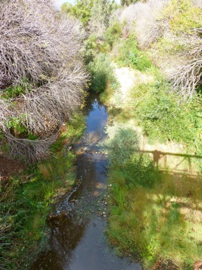 San Francisquito Creek in Menlo Park on 10/7/11