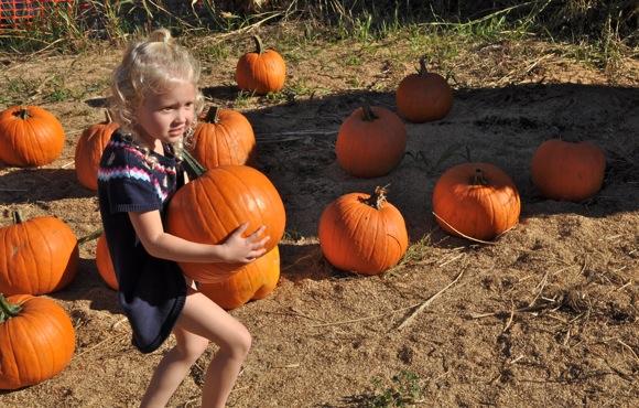 Pumpkin benefit at Webb Ranch on Oct. 19