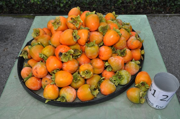"Post image for It's the time of year for the ""persimmon people"""