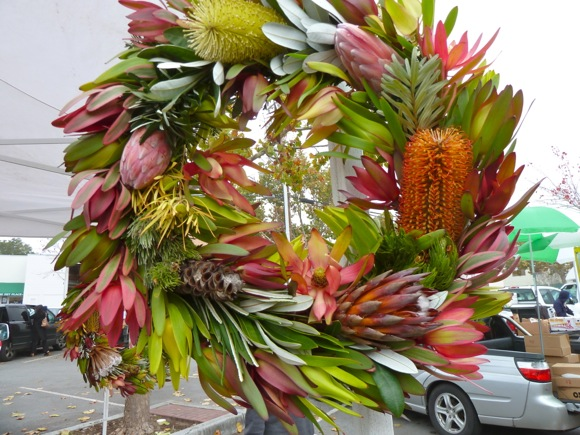 protea wreath at Menlo Park Farmers Market