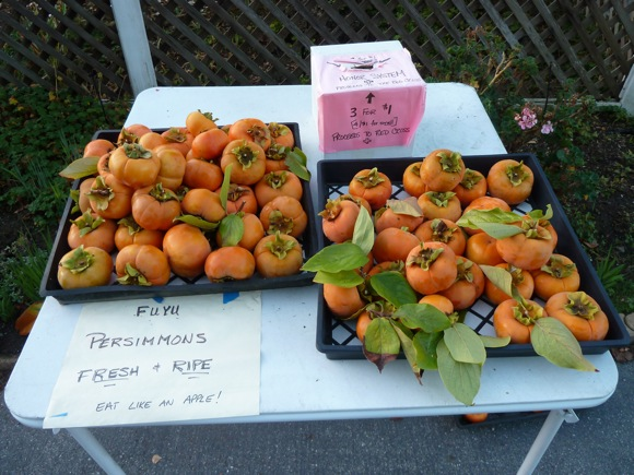 persimmon stand on Wallea Dr. in Menlo Park