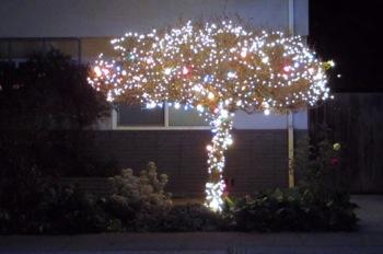 holiday tree in Menlo Park, CA