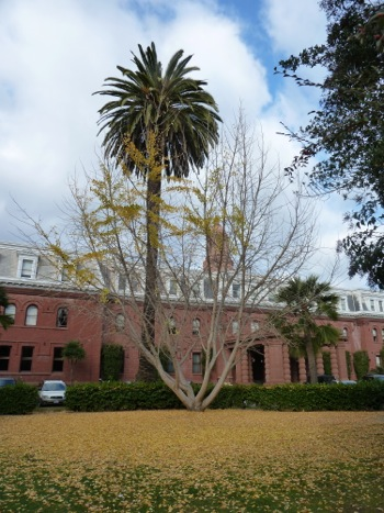 Sacred Heart Prep campus Dec. 2011