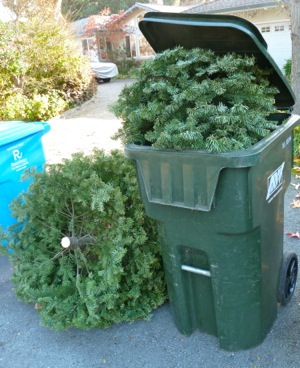 Curbside recyling of Christmas trees for homeowners