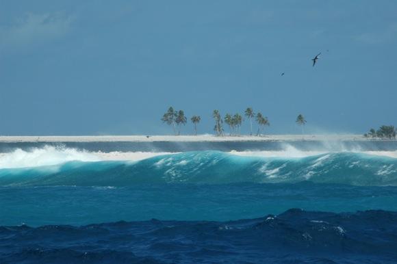Clipperton Atoll by Nicole Crane