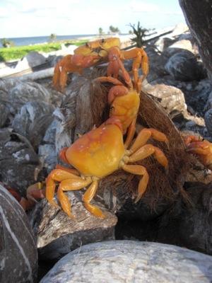 Café Scientifique shares journeys to two pristine coral reefs on Jan. 10