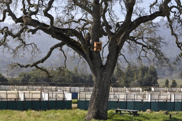 Owl house in oak at Horse Park
