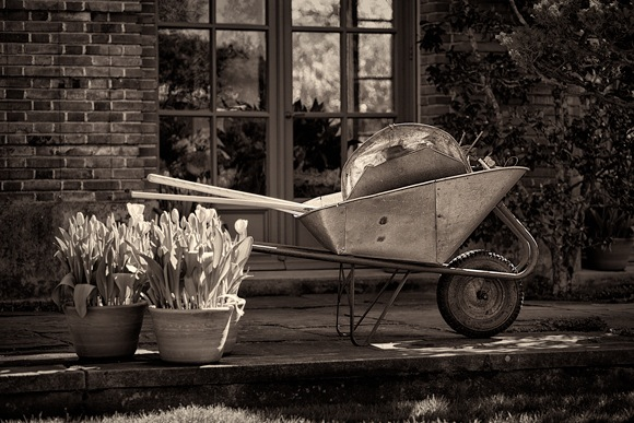 Wheelbarrow in garden at Filoli by Scott Loftesness