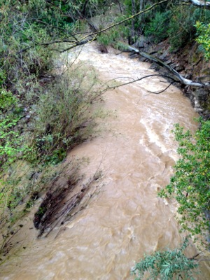San Francisquito Creek in Menlo Park on 3/17/12