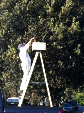 Spotted: Bee removal at Menlo Park's Trader Joe's