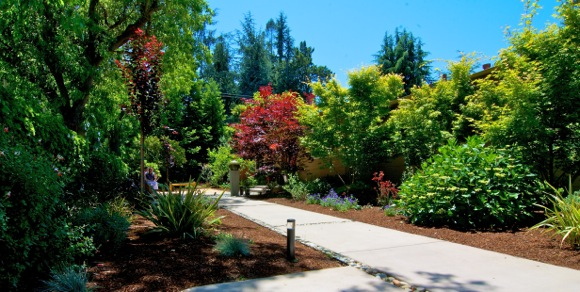 Menlo Park front yard is transformed from functional to peaceful (even on a busy corner)
