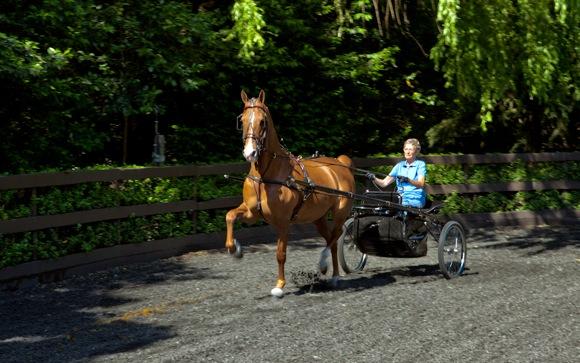 Former Atherton mayor and avid equestrian, Nan Chapman, dies at 80