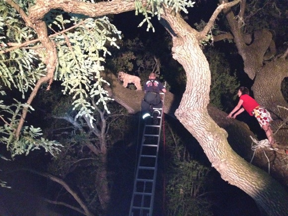 Guinness the Wheaten Terrier rescued from Atherton oak tree by Menlo Park firefighters