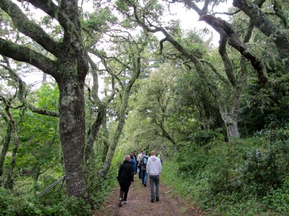 walkers at Djerassi grounds in Woodside