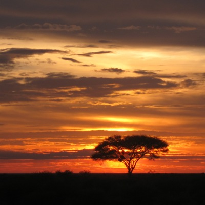 African Sunset by Frances Freyberg