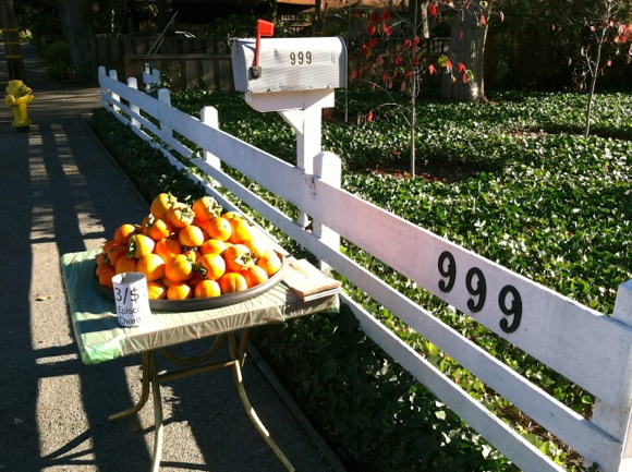 Persimmon bounty on Olive St in Menlo Park