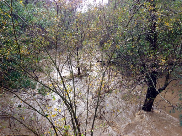 rain swollen San Francisquito Creek in December 2012